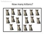 how many kittens27