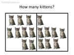 how many kittens28