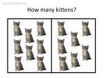 how many kittens29