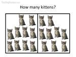 how many kittens30