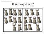 how many kittens32