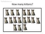 how many kittens37
