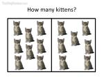 how many kittens5