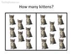 how many kittens6