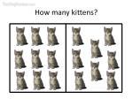 how many kittens7