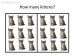 how many kittens8
