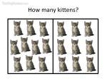 how many kittens9