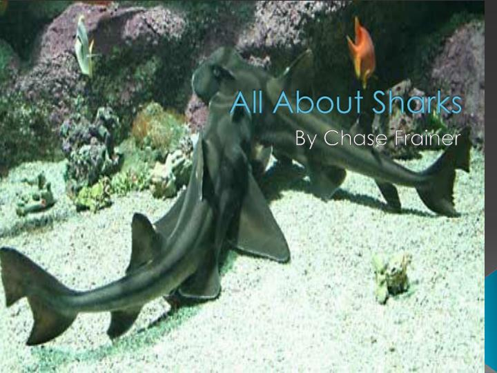 all about sharks n.