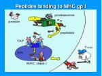 peptides binding to mhc gp i1