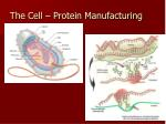the cell protein manufacturing