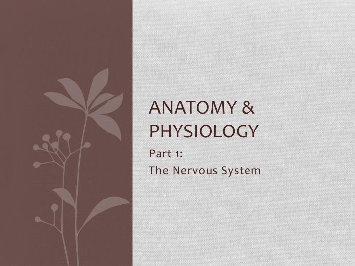 anatomy physiology n.