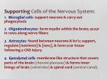 supporting cells of the nervous system
