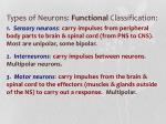 types of neurons functional classification