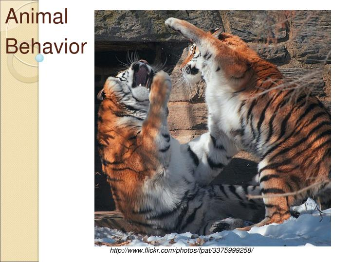 animal behavior n.