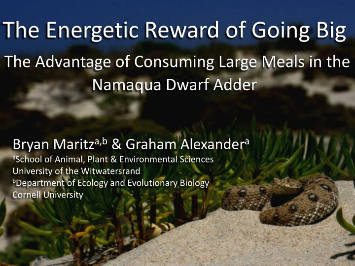 the energetic reward of going big the advantage of consuming large meals in the namaqua dwarf adder n.