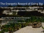 the energetic reward of going big the advantage of consuming large meals in the namaqua dwarf adder