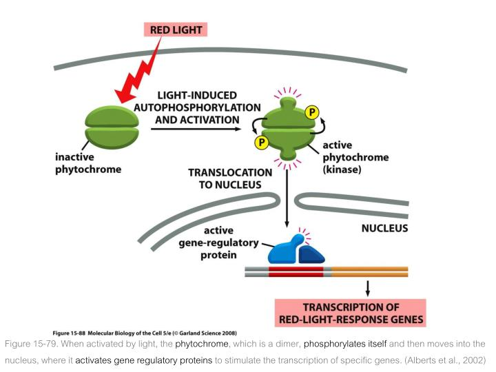 Figure 15-79. When activated by light, the