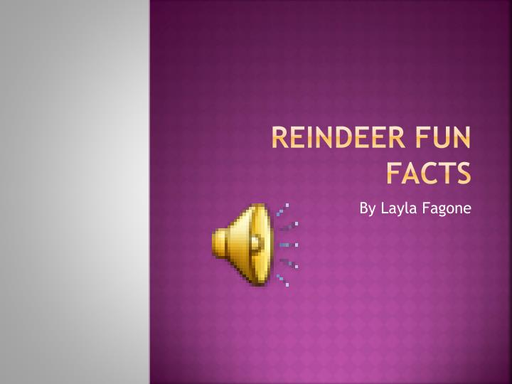 reindeer fun facts n.