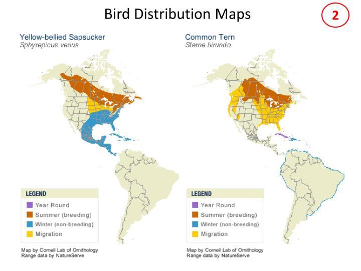 Bird distribution maps1