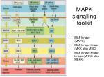 mapk signalling toolkit