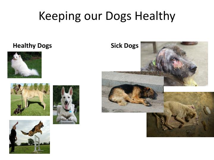 keeping our dogs healthy n.