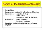 names of the muscles of forearm