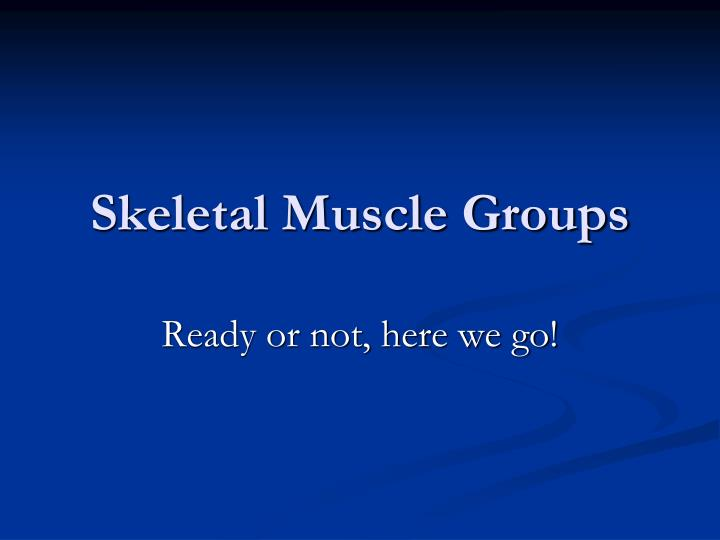 skeletal muscle groups n.