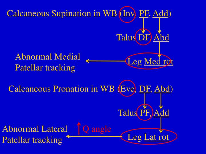Calcaneous Supination in WB (Inv,