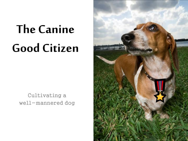 the canine good citizen n.