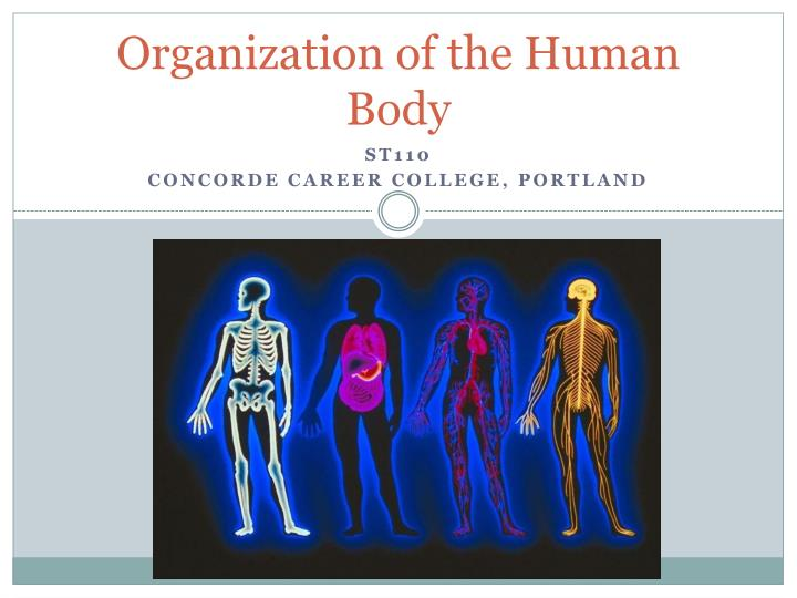 organization of the human body n.