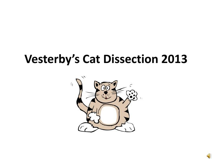 vesterby s cat dissection 2013 n.