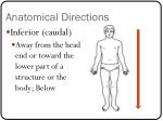 anatomical directions2