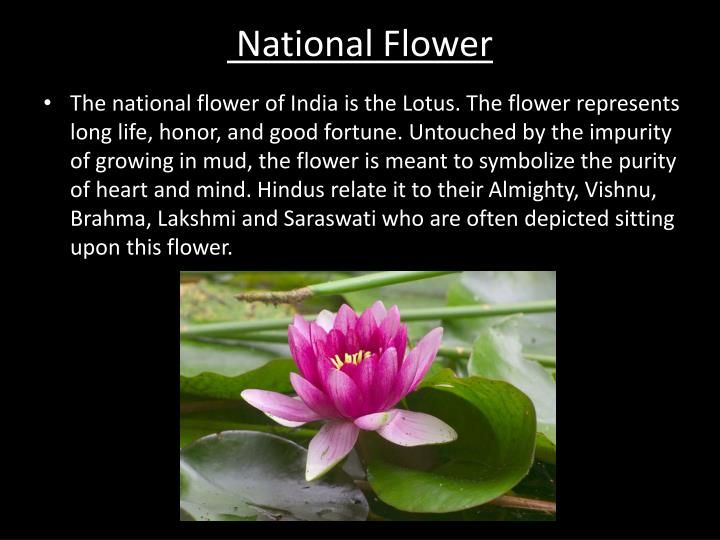 National Flower. Ppt India S National Symbols Powerpoint Presentation Id 2074801