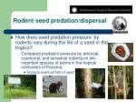 rodent seed predation dispersal