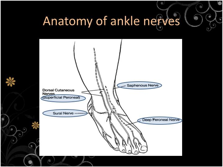 Ppt Ankle Block Powerpoint Presentation Id2075464