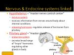 nervous endocrine systems linked