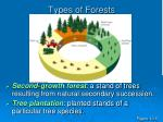 types of forests1