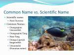 common name vs scientific name