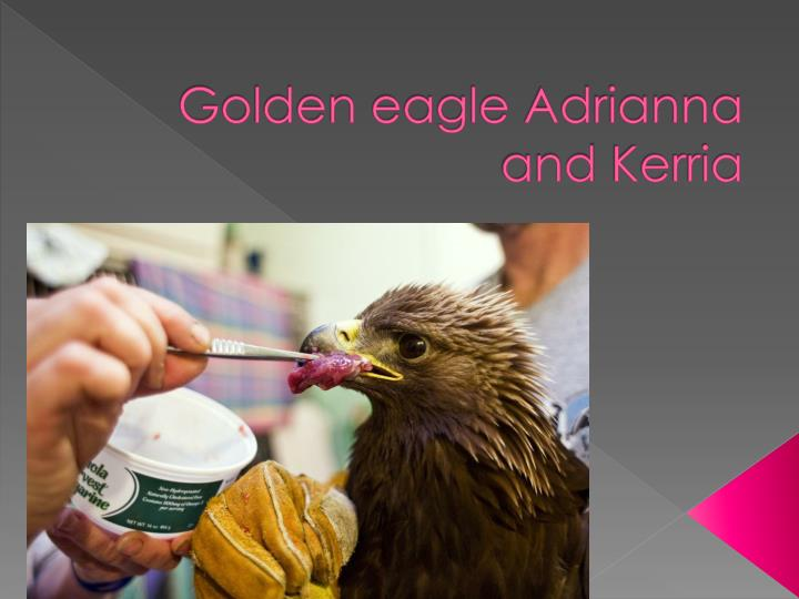 golden eagle a drianna and k erria n.