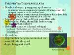 pyrophyta dinoflagellata