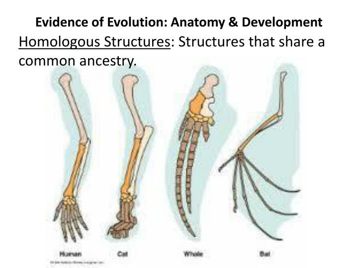 PPT - EVOLUTION PowerPoint Presentation - ID:2076918