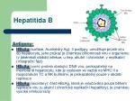 hepatitida b1