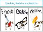 shachita bedicha and melicha