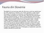 fauna din slovenia1