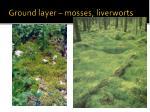 ground layer mosses liverworts