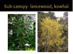 sub canopy lancewood kowhai