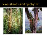 vines lianas and epiphytes