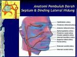 anatomi pembuluh darah septum dinding lateral hidung