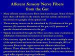 afferent sensory nerve fibers from the gut