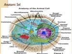 anatomi sel